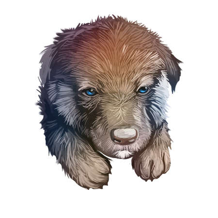 Shiloh Shepherd dog sticking out tongue pet with long fur digital art. Animalistic hand drawn portrait watercolor style closeup. Domestic animal with hairy coat, hound canine with sharp ears.