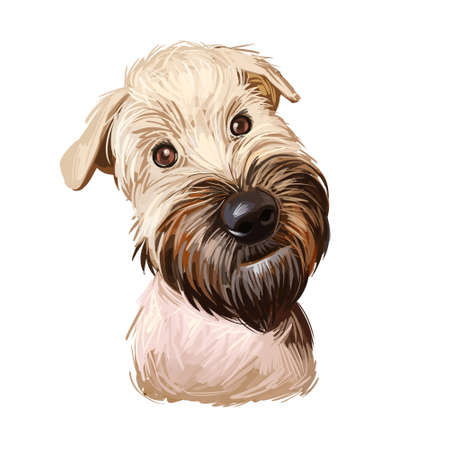 Soft coated wheaten terrier with long haired coat digital art. Closeup of watercolor portrait of pet with furry muzzle, hand drawn canine purebred with small ears. Domestic animal cute pedigree. Фото со стока