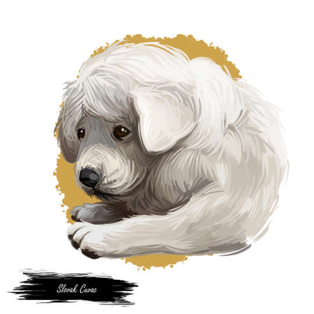 Slovak cuvac dog breed with long fur digital art. Watercolor portrait close up of domesticated animal sticking out tongue, hand drawn doggy slovakian purebred canine profile. Clipart of hound.