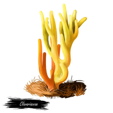 Clavariaceae or coral, antler or spaghetti fungi, worm mold mushroom digital art illustration. Boletus has yellow, like pod body and grows on corals in water. Plants growing in seas and oceans.