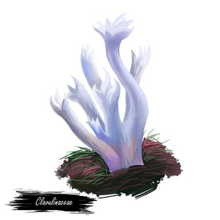 Clavulinaceae-Pilz-Nahaufnahme digitale Kunstillustration. Steinpilze haben weiße Fruchtkörper und wachsen auf Korallen in Meeren oder Ozeanen. Endäste fein in scharfe Spitzen geteilt. Pflanzen wachsen im Wasser.
