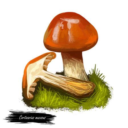 Cortinarius mucosus, orange webcap or slimy cortinarius mushroom closeup digital art illustration. Boletus has bright colored cap. Mushrooming season, plant of gathering plants growing in forests Stock Photo
