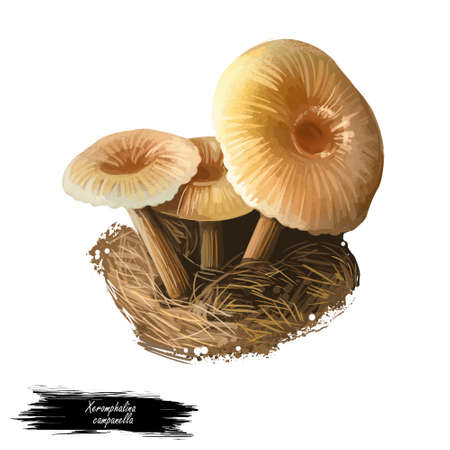 Xeromphalina campanella, golden trumpet or bell Omphalina mushroom closeup digital art illustration. Boletus has thin brown stalk with yellow cap. Mushrooming season, plants growing in forests