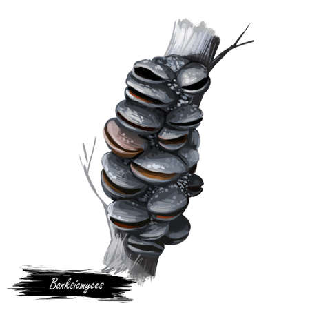 Genus Banksiamyces mushroom closeup digital art illustration. Boletus has cup shaped receptacles borne on stipe, colored blackish grey. Mushrooming season, plant of gathering plants growing in forest Reklamní fotografie