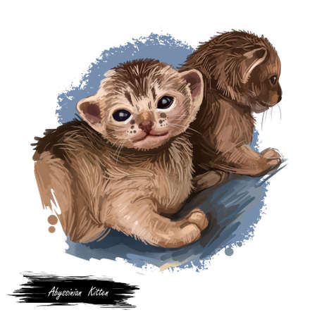 Abyssinian cat isolated on white background. Digital art illustration of hand drawn kitty for web. Aby kitten breed of domestic short haired pet ruddy color and have distinctive ticked tabby coat Banque d'images - 131069505
