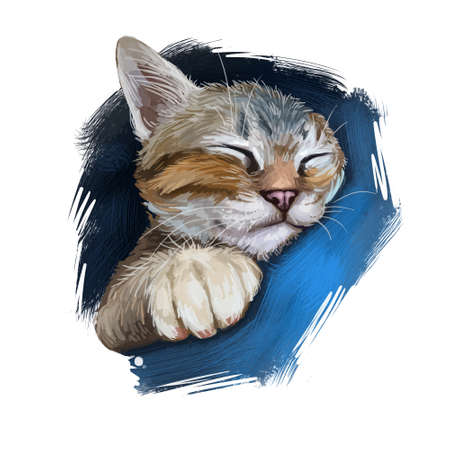 Aegean cat isolated on white background. Digital art illustration of hand drawn kitty for web. Kitten medium sized with semi longhair and bicolour coat. Pet have almond shaped yellow eyes 版權商用圖片 - 131069511