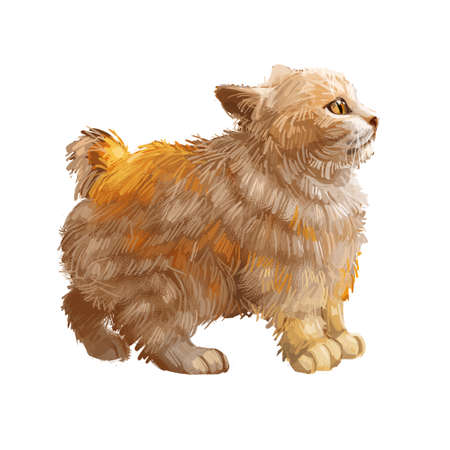American Bobtail very sturdy and uncommon breed, domestic pet. Cat isolated on white background. Digital art illustration of hand drawn cat for web. Kitten with short haired coat and green eyes Фото со стока