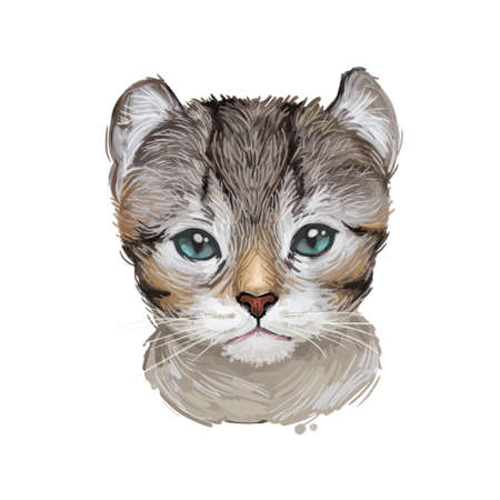 American Curl cat isolated on white background. Digital art illustration of hand drawn kitty for web. Kitten medium sized with ruddy coat, unusual ears which bend backward, green eyes. Pet looking up Фото со стока