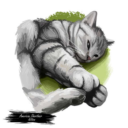 American Shorthair cat isolated on white background. Digital art illustration of hand drawn kitty for web. Kitten short haired medium size, have grey and black coat. Domestic pet sleeping on blanket Zdjęcie Seryjne