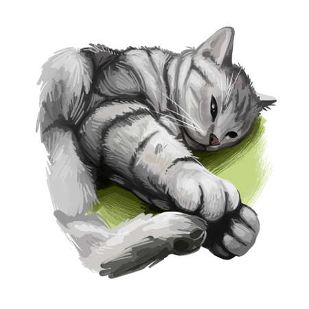 American Shorthair cat isolated on white background. Digital art illustration of hand drawn kitty for web. Kitten short haired medium size, have grey and black coat. Domestic pet sleeping on blanket Фото со стока