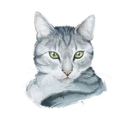 American Wirehair cat isolated on white background. Digital art illustration of hand drawn kitty for web. Kitten wirehaired medium size, have bicolor, ruddy and black, tabby coat and yellow eyes Banco de Imagens - 131069591