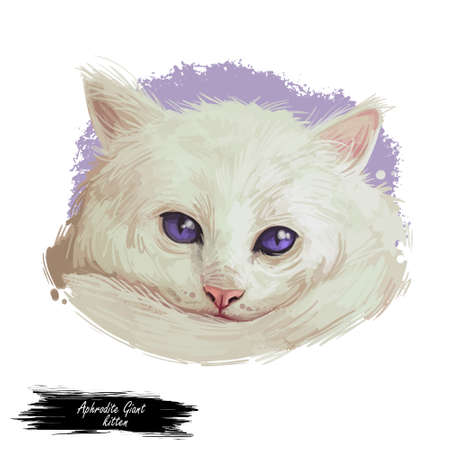 Domestic breed Aphrodite Giant cat isolated on white background. Digital art illustration of hand drawn kitty for web. Kitten long haired medium size, have white fluffy coat and blue eyes Stock fotó