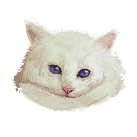 Domestic breed Aphrodite Giant cat isolated on white background. Digital art illustration of hand drawn kitty for web. Kitten long haired medium size, have white fluffy coat and blue eyes Zdjęcie Seryjne