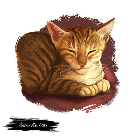 Arabian or Egyptian Mau cat isolated on white background. Digital art illustration of hand drawn kitty. Kitten short haired medium size, have bicolor, white and grey, coat. Pet licking fur by tongue Фото со стока