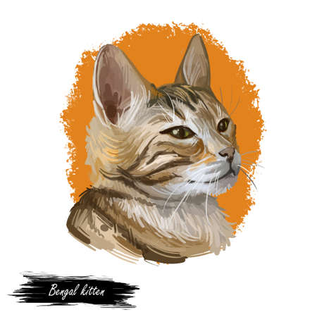 Bengal cat isolated on white background. Digital art illustration of hand drawn kitty for web. Dangerous kitten short haired medium size, have rust spotted coat like rosette markings and yellow eyes Stock fotó