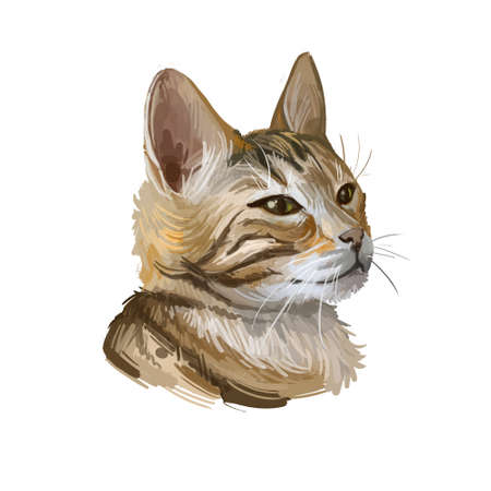 Bengal cat isolated on white background. Digital art illustration of hand drawn kitty for web. Dangerous kitten short haired medium size, have rust spotted coat like rosette markings and yellow eyes Banque d'images - 131069606