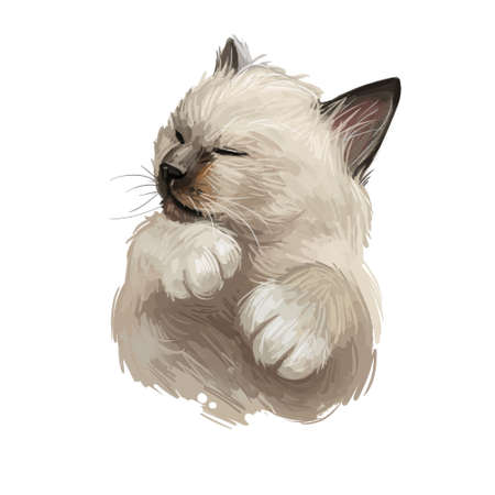 Birman or Sacred Cat of Burma isolated on white background. Digital art illustration of hand drawn kitty for web. Long haired and color pointed kitten with silky white coat and deep blue eyes Banco de Imagens - 131069601