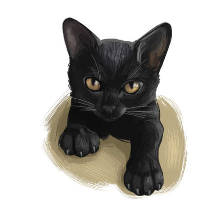 Bombay cat isolated on white background. Digital art illustration of hand drawn kitty for web. Calm pet lying on floor. Short haired solid kitten with short and velvety black coat and deep yellow eyes 스톡 콘텐츠