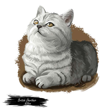 British Shorthair cat isolated on white background. Digital art illustration of hand drawn kitty for web. Short haired elegance kitten with dense and fluffy ashy grey shade of coat, yellow eyes