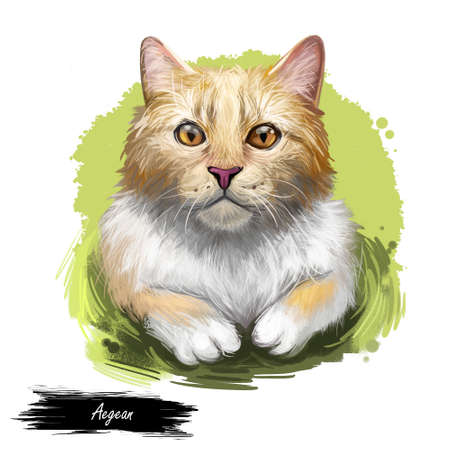 Aegean cat isolated on white background. Digital art illustration of hand drawn kitty for web. Kitten medium sized with semi longhair and bicolour coat. Pet have almond shaped yellow eyes