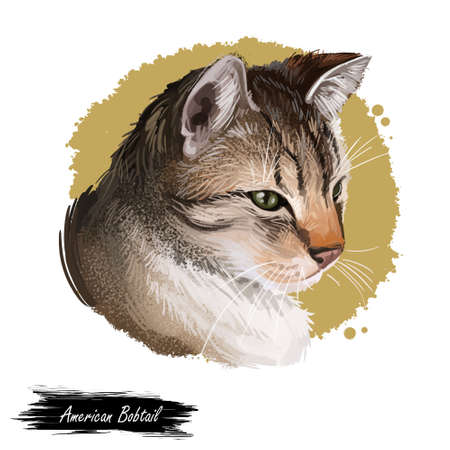 American Bobtail very sturdy and uncommon breed, domestic pet. Cat isolated on white background. Digital art illustration of hand drawn cat for web. Kitten with short haired coat and green eyes Stock fotó
