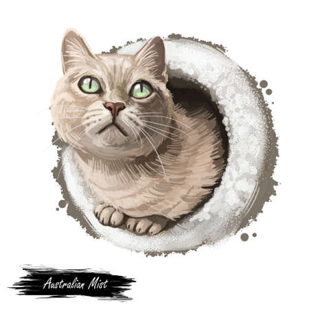 Australian or Spotted Mist cat isolated on white background. Digital art illustration of hand drawn kitty for web. Kitten short haired medium size and have grey coat, large and bright green eyes