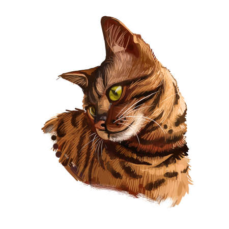 Bengal cat isolated on white background. Digital art illustration of hand drawn kitty for web. Dangerous kitten short haired medium size, have rust spotted coat like rosette markings and yellow eyes Zdjęcie Seryjne