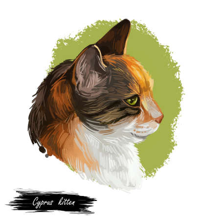 Domestic breed Cyprus or Cypriot cat isolated on white background. Digital art illustration of hand drawn kitty for web. Sleeping kitten with soft and wooly coat. Watercolor picture of pet Stock fotó
