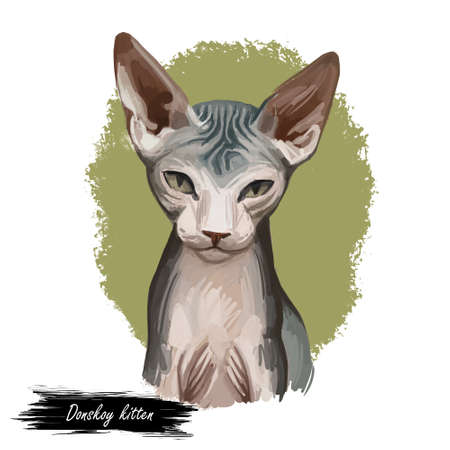 Breed Donskoy, Don Sphynx or Russian Hairless cat isolated on white background. Digital art illustration of hand drawn kitty for web. Hairless pet with large ears, almond shaped eyes and soft skin Stock fotó