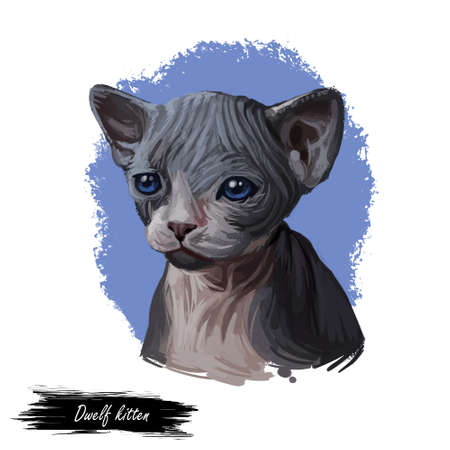 Domestic breed Dwelf cat isolated on white background. Digital art illustration of hand drawn kitty for web. Sleeping hairless kitten with curl ears which bend backward. Watercolor picture of pet Stockfoto