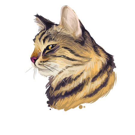 American Wirehair cat isolated on white background. Digital art illustration of hand drawn kitty for web. Kitten wirehaired medium size, have bicolor, ruddy and black, tabby coat and yellow eyes Banco de Imagens - 131778996