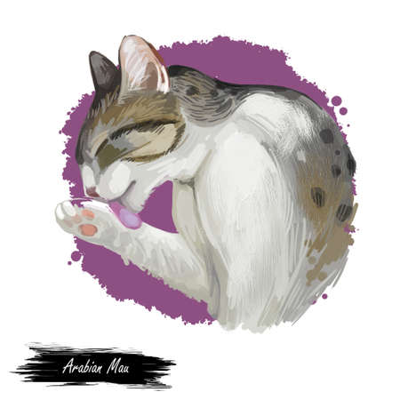 Arabian or Egyptian Mau cat isolated on white background. Digital art illustration of hand drawn kitty. Kitten short haired medium size, have bicolor, white and grey, coat. Pet licking fur by tongue Stock fotó