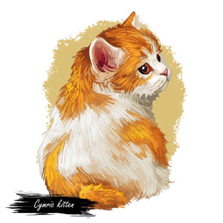 Domestic breed Cymric or Longhair Manx cat isolated on white background. Digital art illustration of hand drawn kitty for web. Kitten with soft bicolor,white and ruddy, coat with deep brown eyes