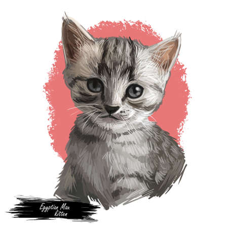Domestic breed Egyptian or Arabian Mau cat isolated on white background. Digital art illustration of hand drawn kitty. Kitten short haired medium size, have bicolor, beige and grey, coat, green eyes Zdjęcie Seryjne