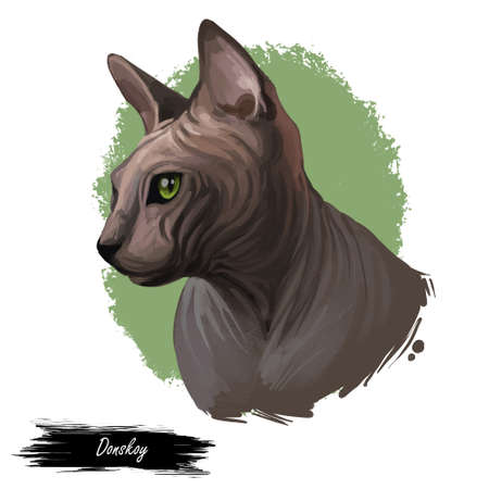 Breed Donskoy, Don Sphynx or Russian Hairless cat isolated on white background. Digital art illustration of hand drawn kitty for web. Hairless pet with large ears, almond shaped eyes and soft skin Stock Photo
