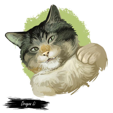 Domestic breed Dragon Li or Chinese, China Li Hua cat isolated on white background. Digital art illustration of hand drawn kitty for web. Kitten have white grey tabby pattern coat and green eyes