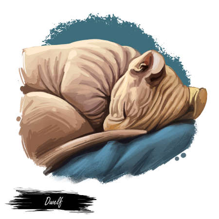 Domestic breed Dwelf cat isolated on white background. Digital art illustration of hand drawn kitty for web. Sleeping hairless kitten with curl ears which bend backward. Watercolor picture of pet Zdjęcie Seryjne