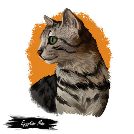 Domestic breed Egyptian or Arabian Mau cat isolated on white background. Digital art illustration of hand drawn kitty. Kitten short haired medium size, have bicolor, beige and grey, coat, green eyes Stock fotó