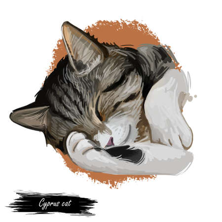 Domestic breed Cyprus or Cypriot cat isolated on white background. Digital art illustration of hand drawn kitty for web. Sleeping kitten with soft and wooly coat. Watercolor picture of pet Banco de Imagens - 131779100
