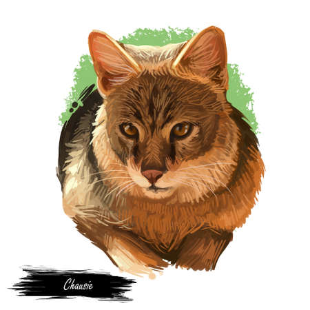 Domestic breed Chausie cat isolated on white background. Digital art illustration of hand drawn kitty for web. Kitten looks like from jungle and have big ears. Coat of pet brown and black ticked tabby