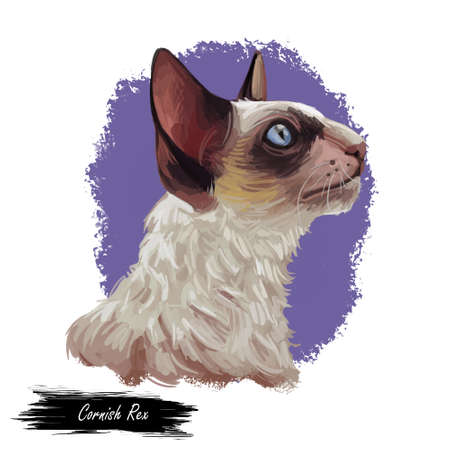 Domestic breed Cornish Rex cat isolated on white background. Digital art illustration of hand drawn kitty for web. Face of kitten with big brown ears and blue eyes. Watercolor picture of pet with coat Banco de Imagens