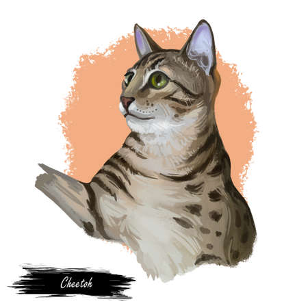 Domestic breed Cheetoh cat isolated on white background. Digital art illustration of hand drawn kitty for web. Beautiful kitten with soft brown spotted coat. Watercolor picture of active pet