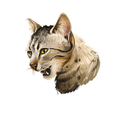 Brazilian Shorthair cat isolated on white background. Digital art illustration of hand drawn kitty for web. Kitten with sleek and elegant appearance. Short haired active pet, sandy beige spotted coat