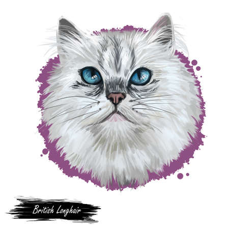 British Longhair cat isolated on white background. Digital art illustration of hand drawn kitty for web. Long haired elegance kitten with dense and fluffy ashy white shade of coat, deep blue eyes Banco de Imagens - 131779108