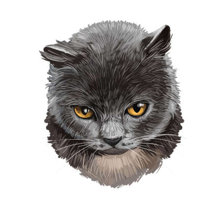 British Shorthair cat isolated on white background. Digital art illustration of hand drawn kitty for web. Short haired elegance kitten with dense and fluffy ashy grey shade of coat, yellow eyes Banco de Imagens - 131779111