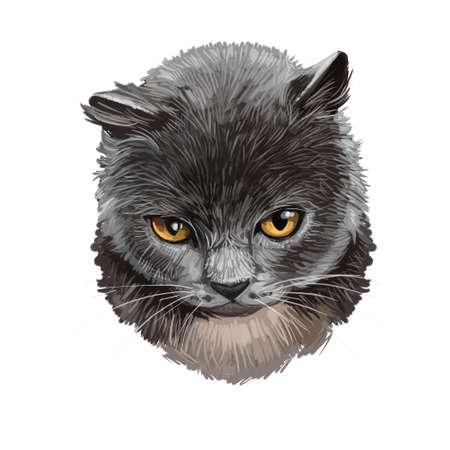 Chat British Shorthair isolé sur fond blanc. Illustration d'art numérique de chaton dessiné à la main pour le web. Chaton élégant à poil court avec un pelage gris cendré dense et duveteux, yeux jaunes