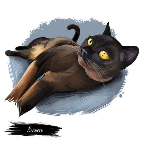 Burmese cat isolated on white background. Digital art illustration of hand drawn kitty for web. Short haired kitten with silky coat and deep yellow eyes. Lying pet with dark sable brown fur. Watercolor picture Stockfoto