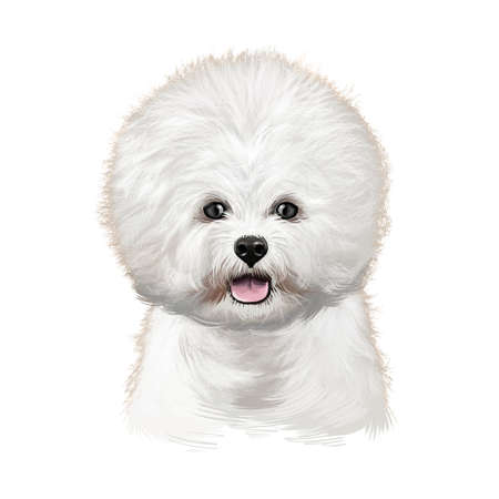 Bichon Tenerife, Bichon Frise, Bichon a poil frise dog digital art illustration isolated on white background. Canary islands origin toy dog. Cute pet hand drawn portrait. Graphic clip art design Banco de Imagens - 131779248