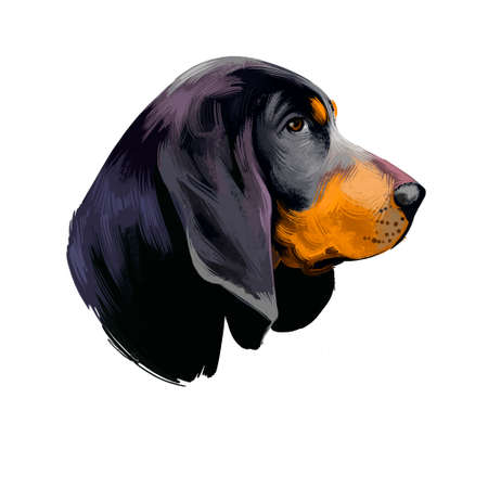 Coonhound dog American Black and Tan digital art illustration isolated on white background. American origin large scenthound dog. Cute pet hand drawn portrait. Graphic clip art design for web, print