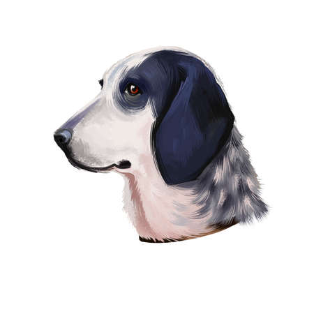 Dog Grand Bleu de Gascogne digital art illustration isolated on white background. French origin scenthound dog. Cute pet hand drawn portrait. Graphic clip art design for web, print Banco de Imagens - 131779253